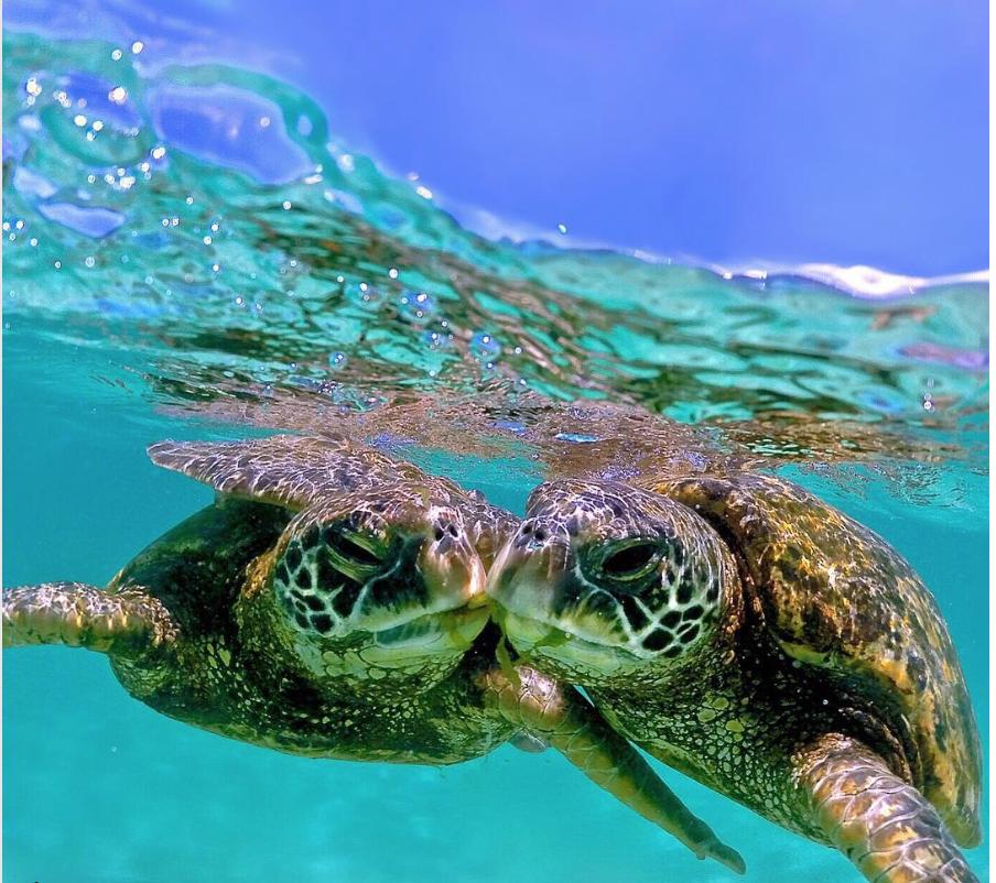 turtles taking things slow