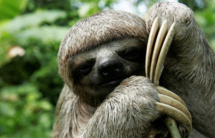 take it slow sloth
